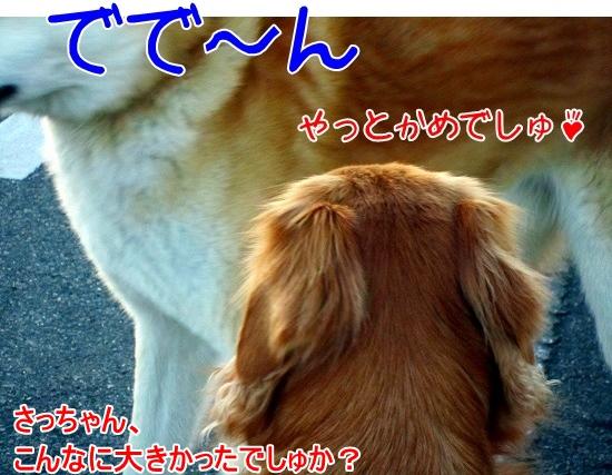 IMG_1196.jpg