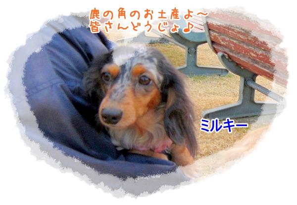 IMG_1385_20110328004455.jpg