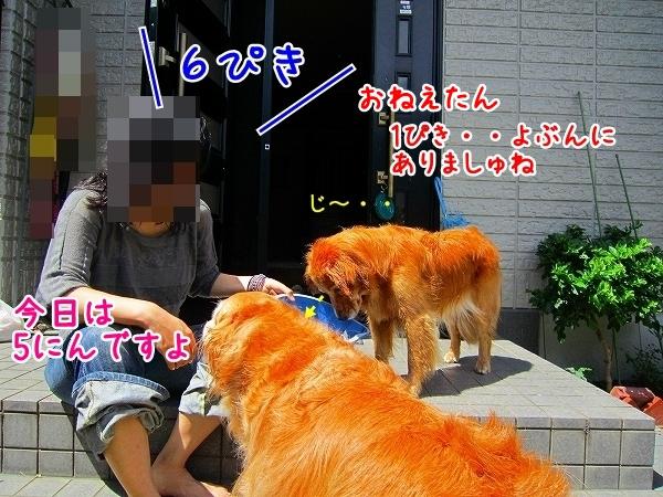 IMG_3525.jpg