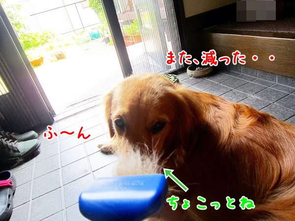 IMG_3702.jpg