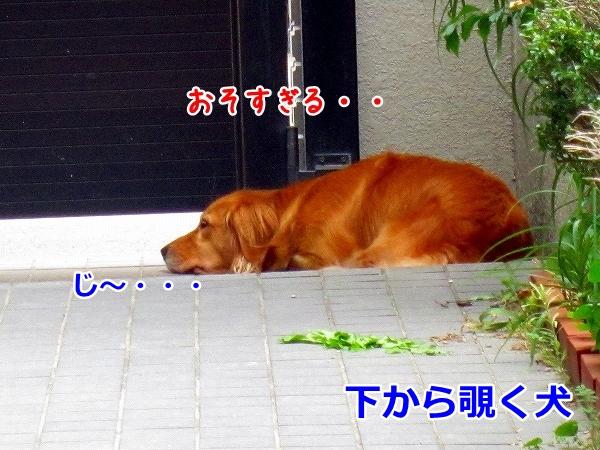 IMG_3744.jpg