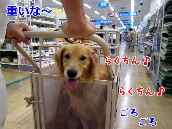 IMG_3766.jpg
