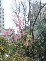 20110410_SBSH_0003.jpg