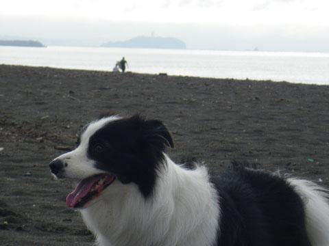 江ノ島と烏帽子岩が見える
