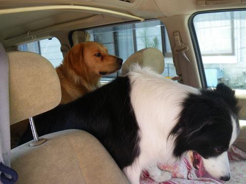 車の中で暴れちゃ駄目よ