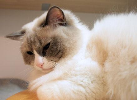 ごっつ眠い。って言ってます。多分。