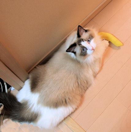 バナナは健康にいいんです。(対人間)