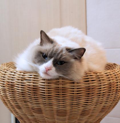 猫用リゾートってあるのかな?