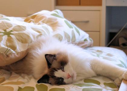 多分自分の寝床だと思ってます。