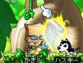 Maple0005_20080824083313.jpg