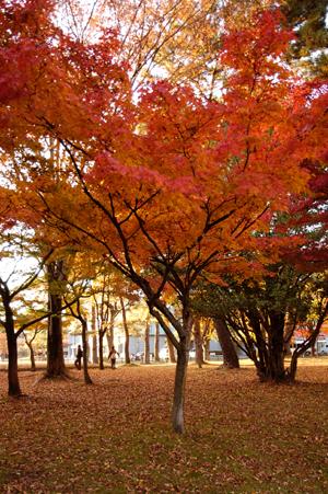秋の文化会館a
