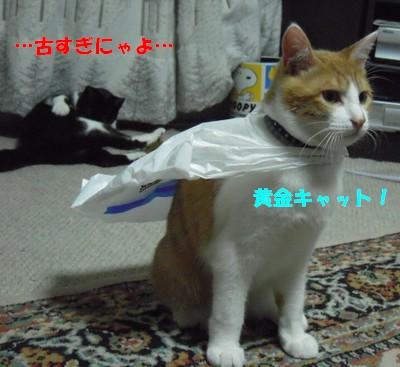 しゃきーん!