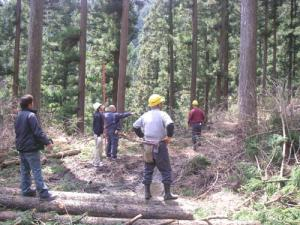 杉大梁用の木を選ぶ