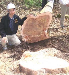 記念写真・伐採木