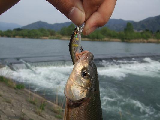 釣り 349