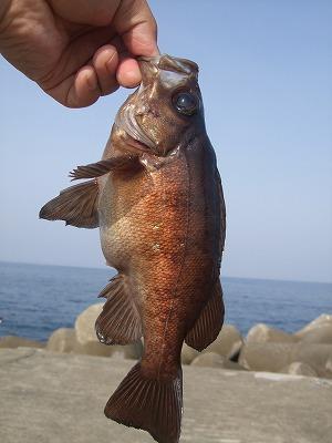 釣り 363