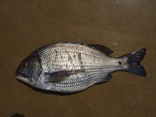 釣り 367