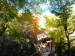 阿弥陀寺への山道