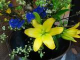 華麗に開くお花。