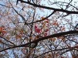 お花見 2