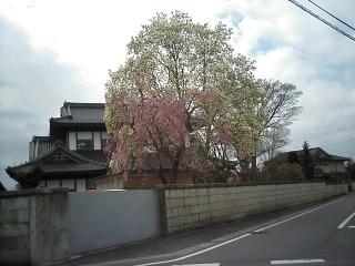 2010-04-10_09-44.jpg