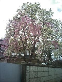 2010-04-10_09-44_0001.jpg
