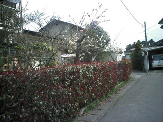 2010-04-10_09-52.jpg