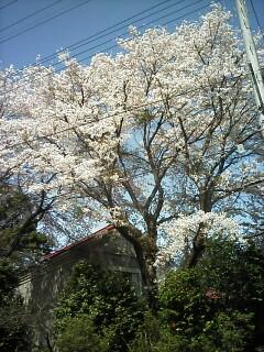 2010-04-14_13-06.jpg