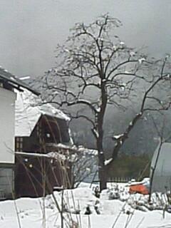 2010-04-17_12-26.jpg