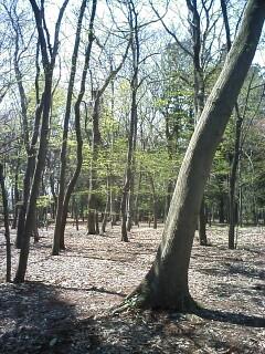 2010-04-18_10-43.jpg