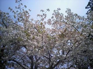 2010-05-05_11-39.jpg
