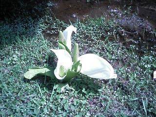 2010-05-05_14-10.jpg
