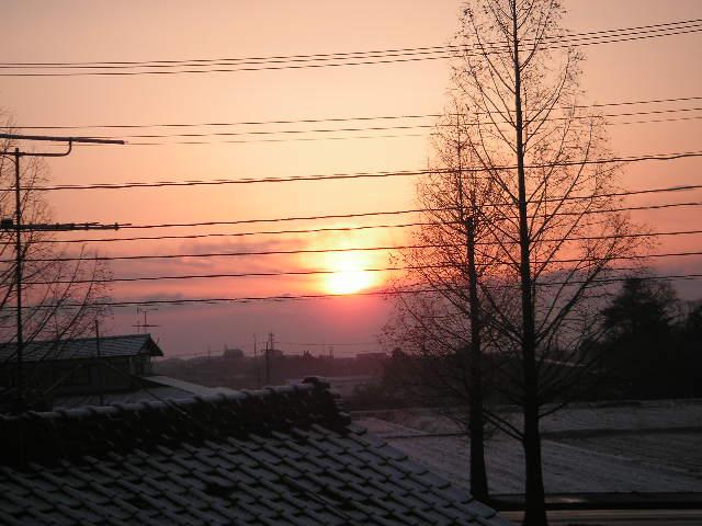 春 雪割草 002