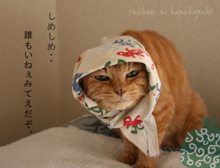 080824_ruihokkamuri_002.jpg