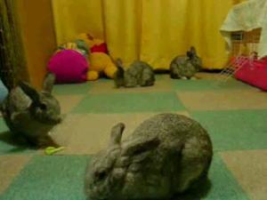 四匹のウサギさん♪