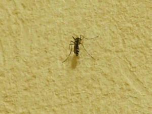 蚊・・・。