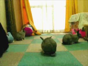 三匹のウサギさん♪
