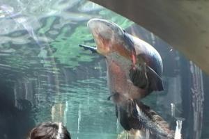 頭上に巨大魚出現!