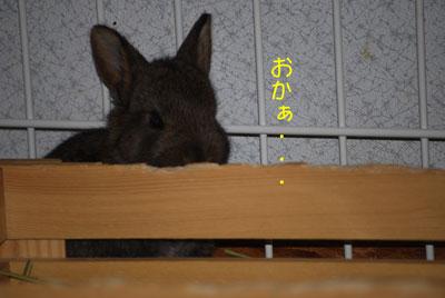 DSC_0025_20080922211530.jpg