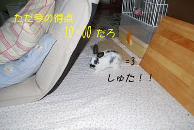 DSC_0031_20081006204355.jpg