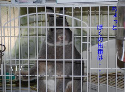 DSC_0033_20080922211540.jpg