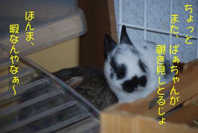 DSC_0039_20080921172253.jpg
