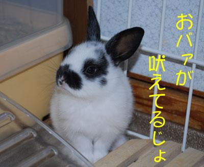DSC_0043_20080928184540.jpg