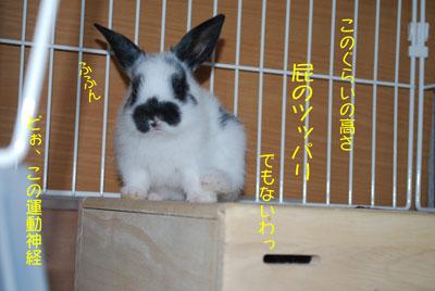 DSC_0066_20080927192336.jpg