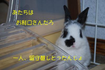 DSC_0068_20081001213521.jpg