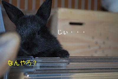 DSC_0069_20081007215055.jpg
