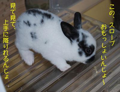 DSC_0080_20080922211453.jpg