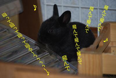 DSC_0090_20080926202519.jpg