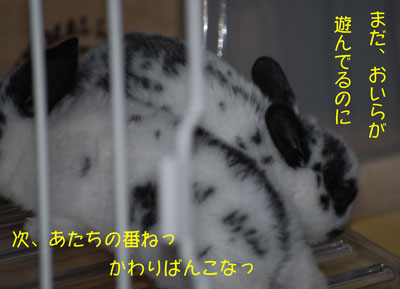 DSC_0091_20080926202530.jpg