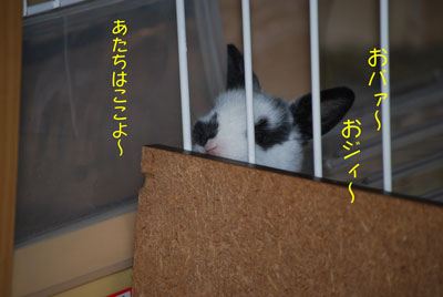 DSC_0094_20080926202540.jpg